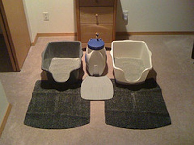 litter box solutions for older cats 1
