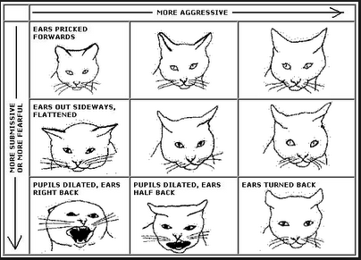 Understanding Your Cat\u0027s Body Language The Ears