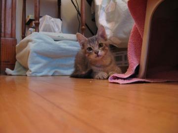 CG - kitten 2