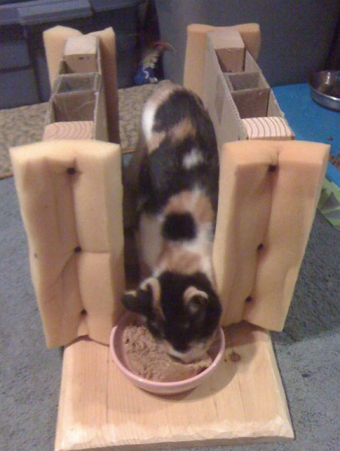 Adult Cat Feeding Stall