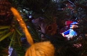 CG hiding in my mom's Christmas tree.
